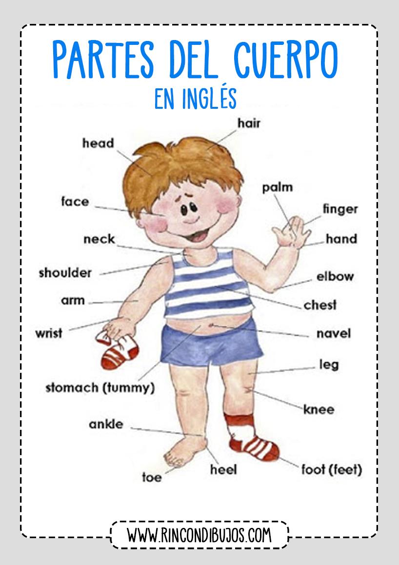 Aprender Ingles Partes del Cuerpo