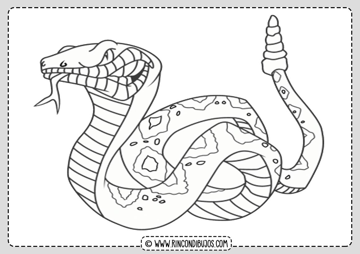 Dibujo Serpiente Cobra