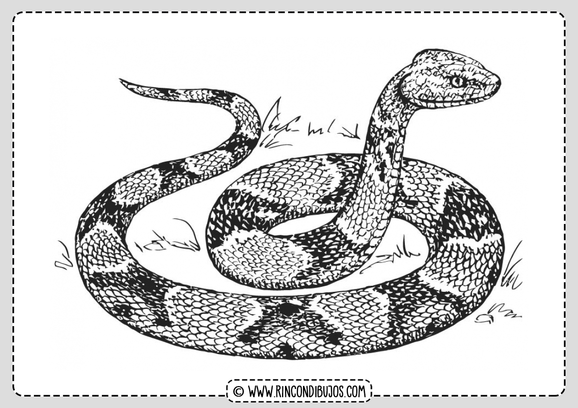 Dibujo Serpiente Salvaje