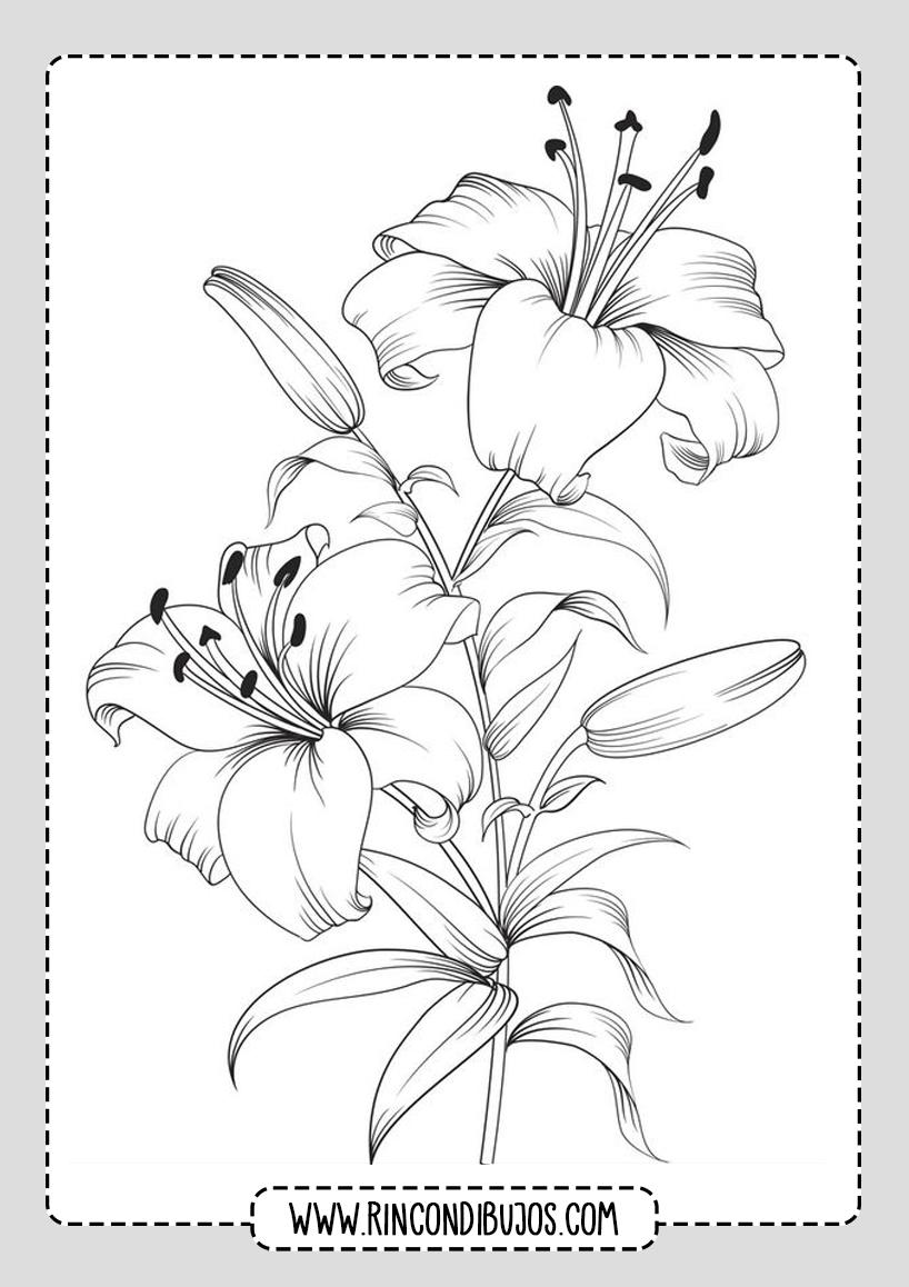 Dibujos de Flores Colorear y Dibujar