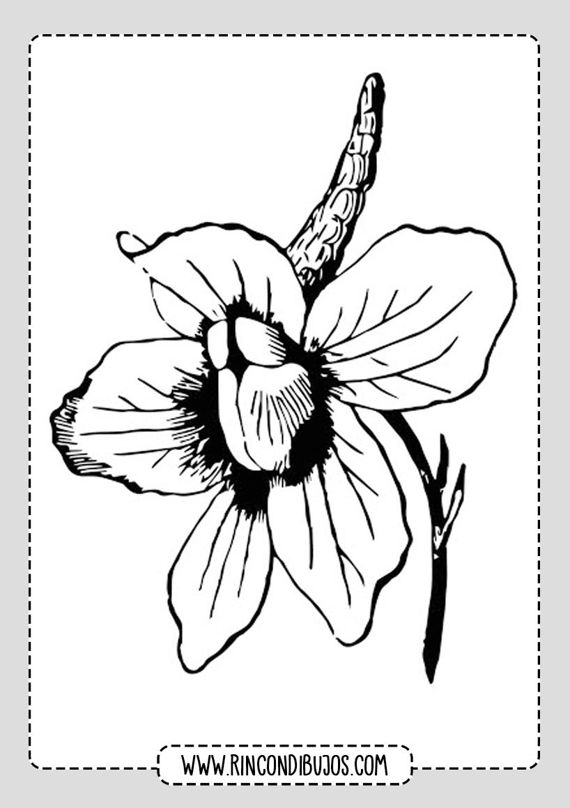 Dibujos de Flores Faciles Colorear