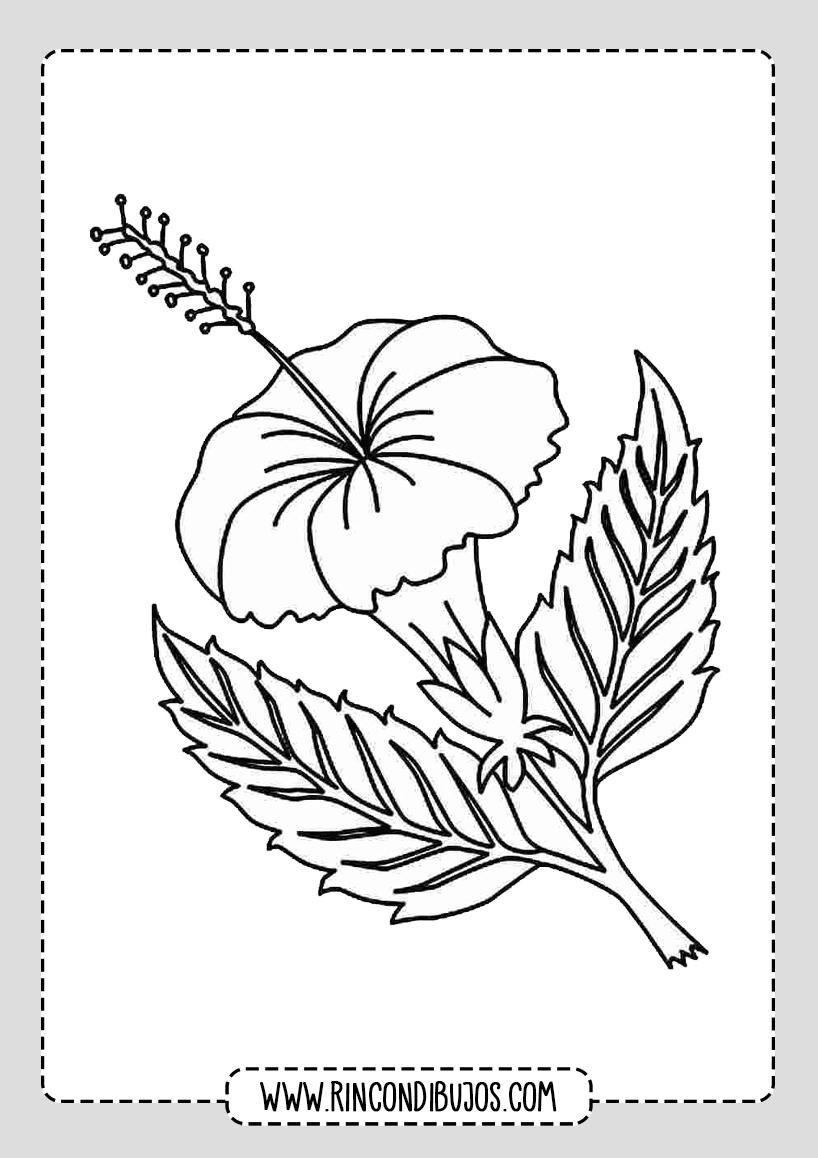 Dibujos de Flores Lindas
