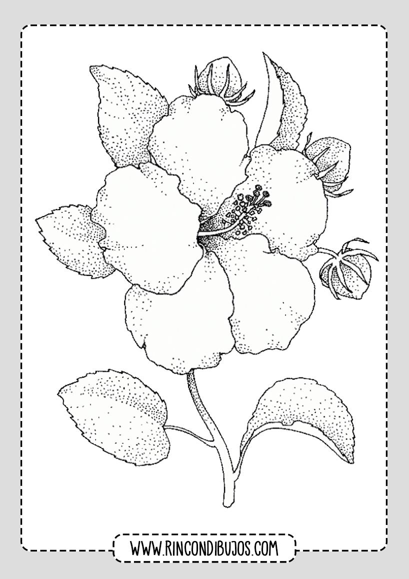 Dibujos de Flores Muy Bonitas para Colorear