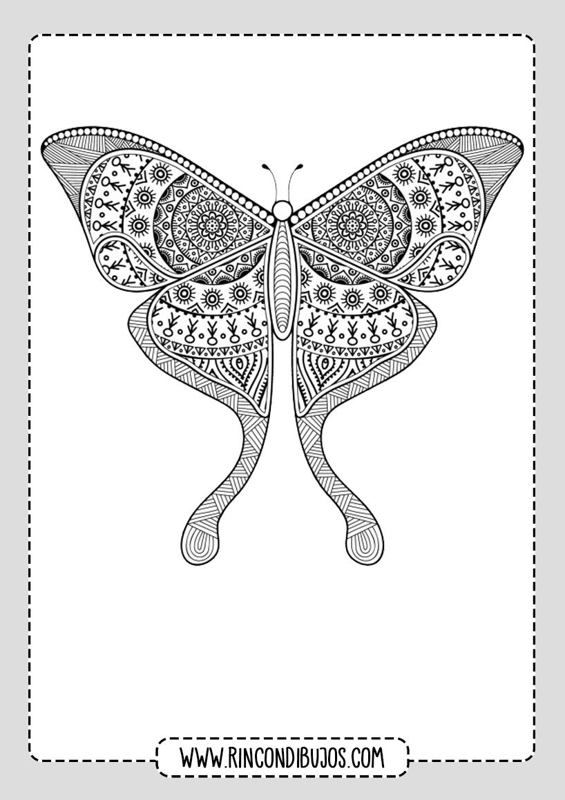 Mariposa Mandala Para Colorear