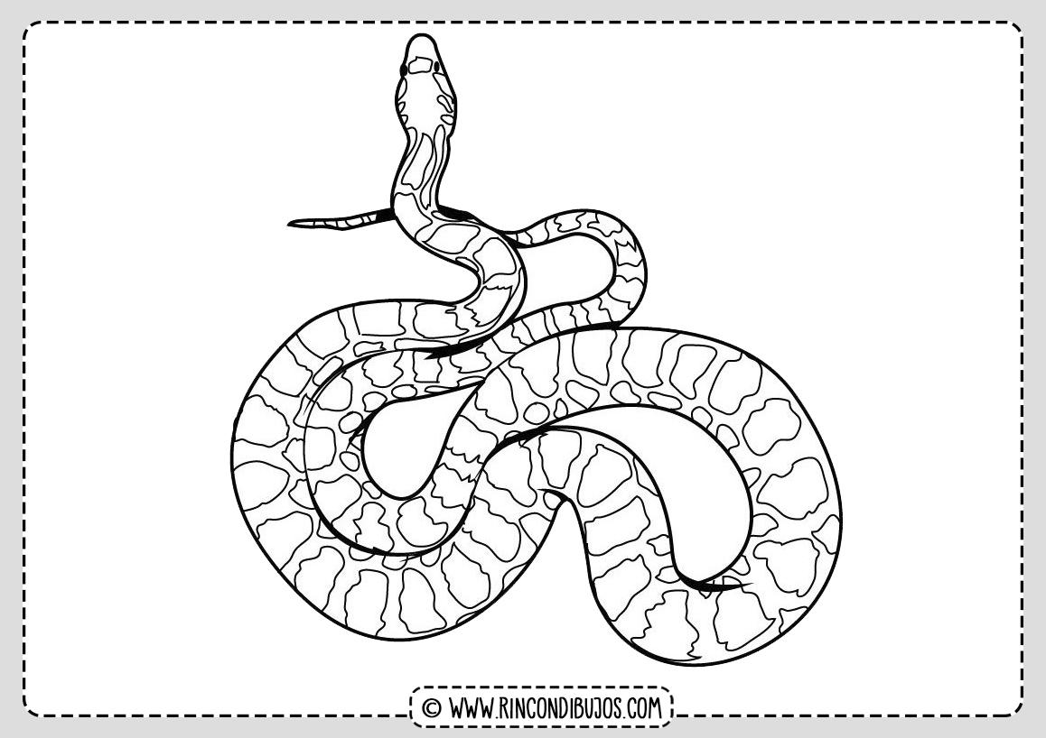Plantilla Serpiente Dibujos