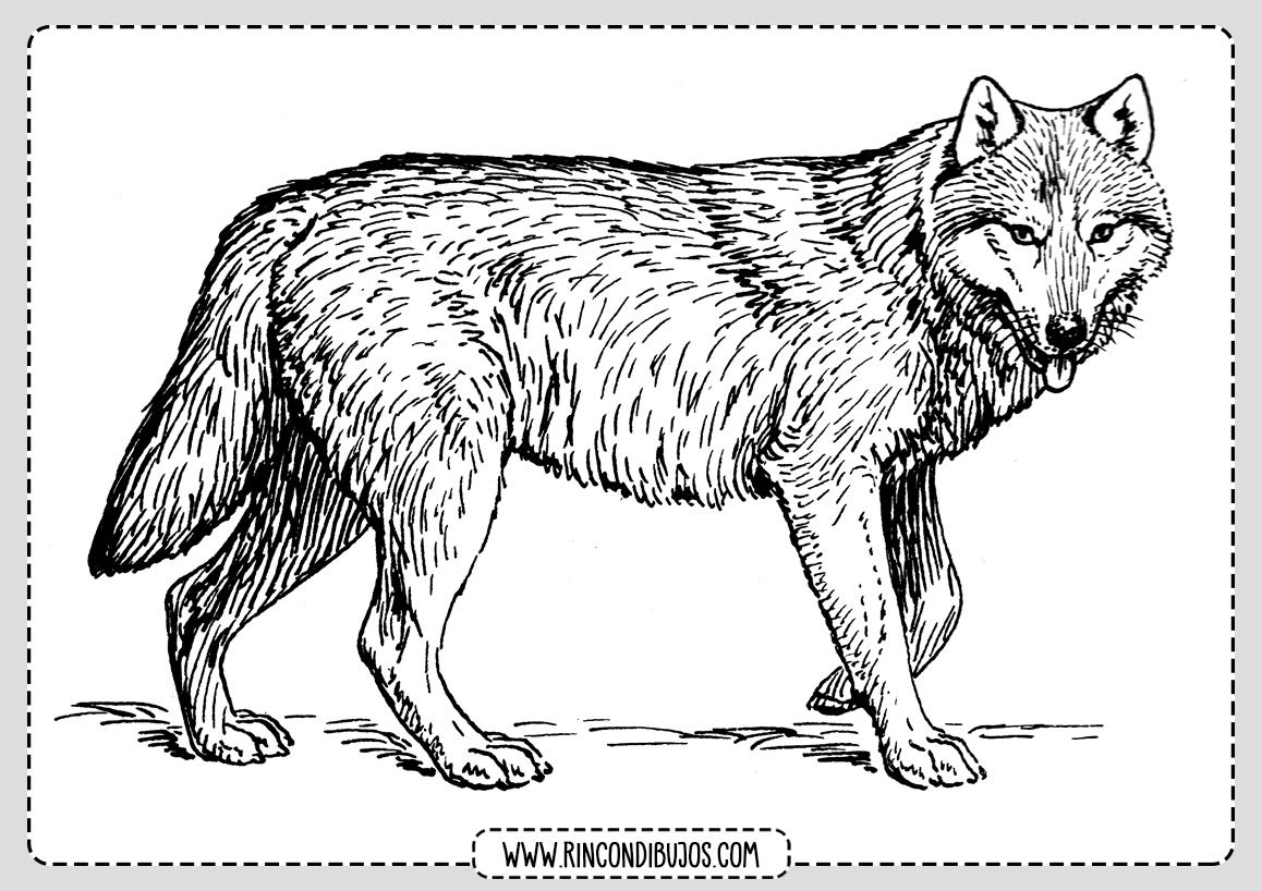 Colorear Dibujos de Lobos