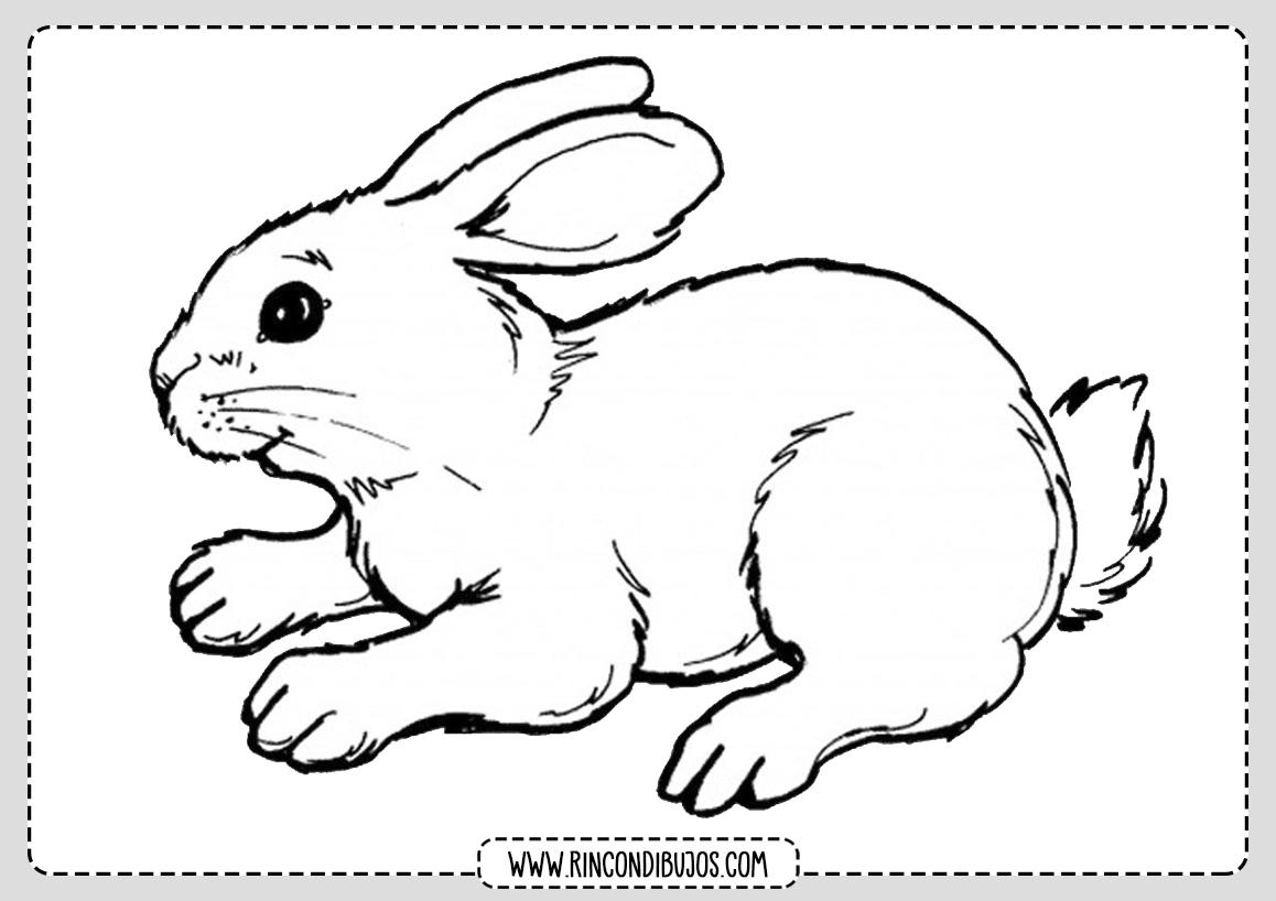 Colorear Fichas Dibujo de conejo