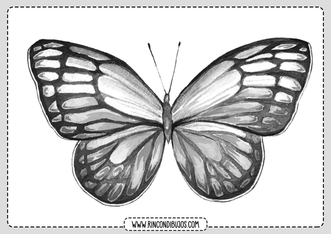 Colorear Mariposas
