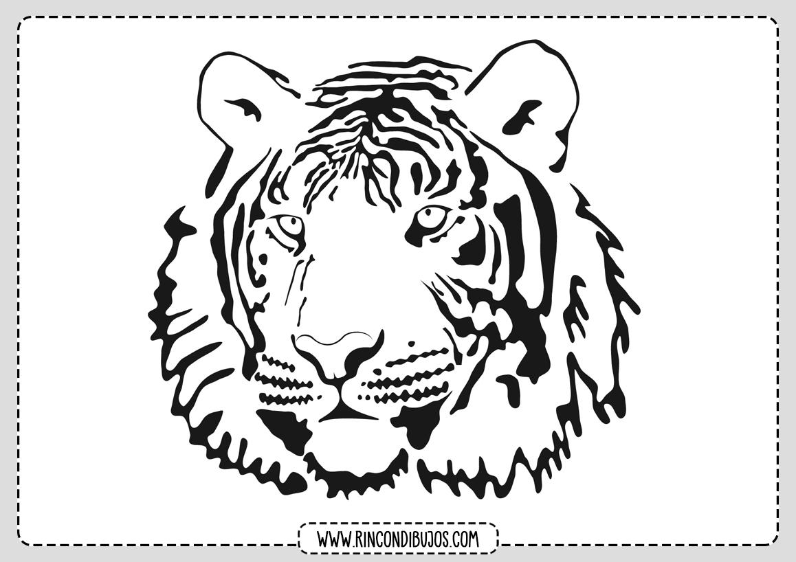 Dibujo Cabeza Tigre Colorear