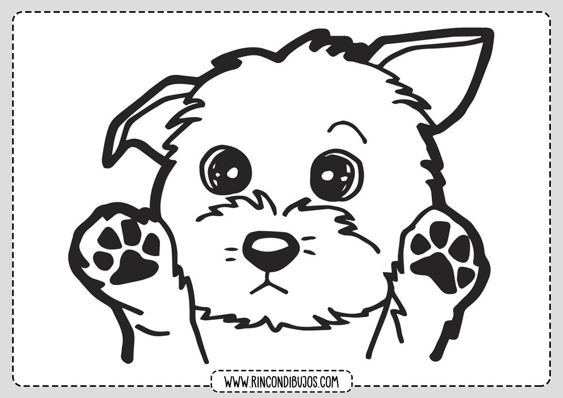 Dibujo Cachorro Perro Colorear