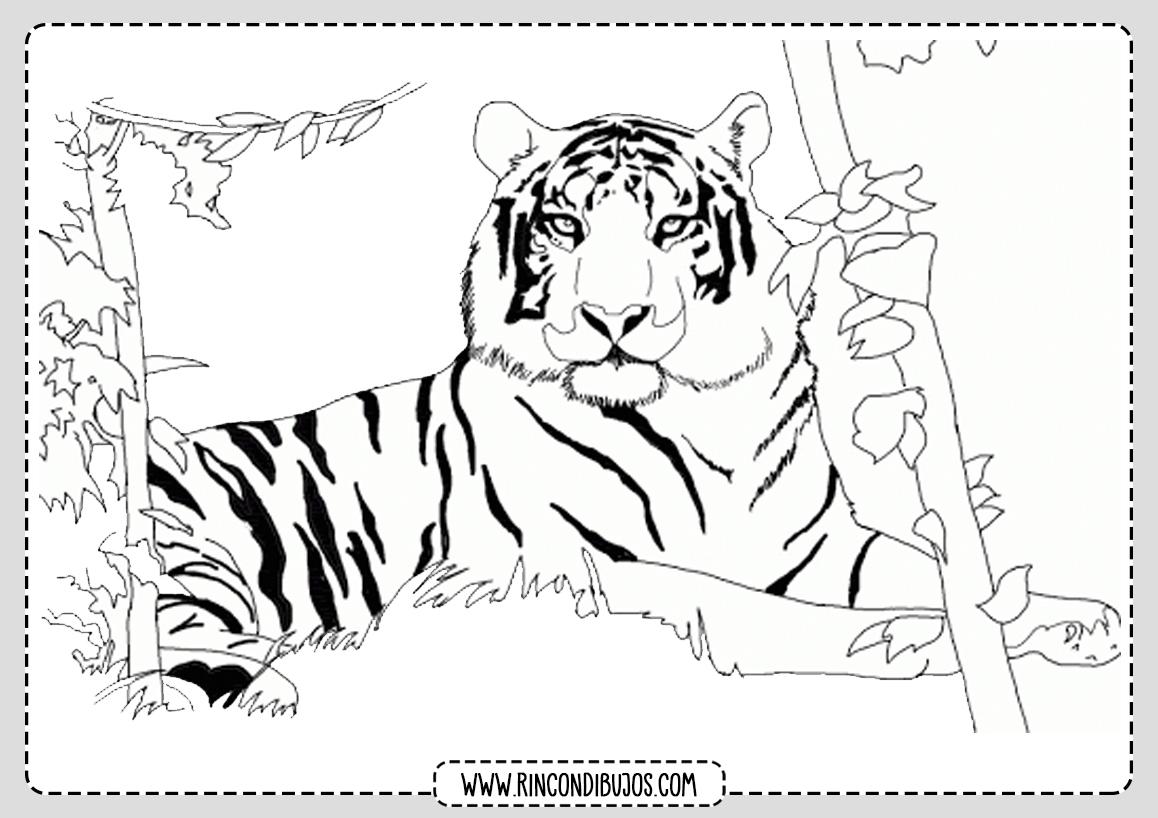 Dibujo Colorear Tigre Pintar
