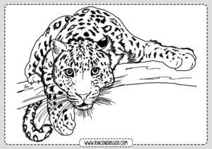 Dibujo de Leopardo Colorear