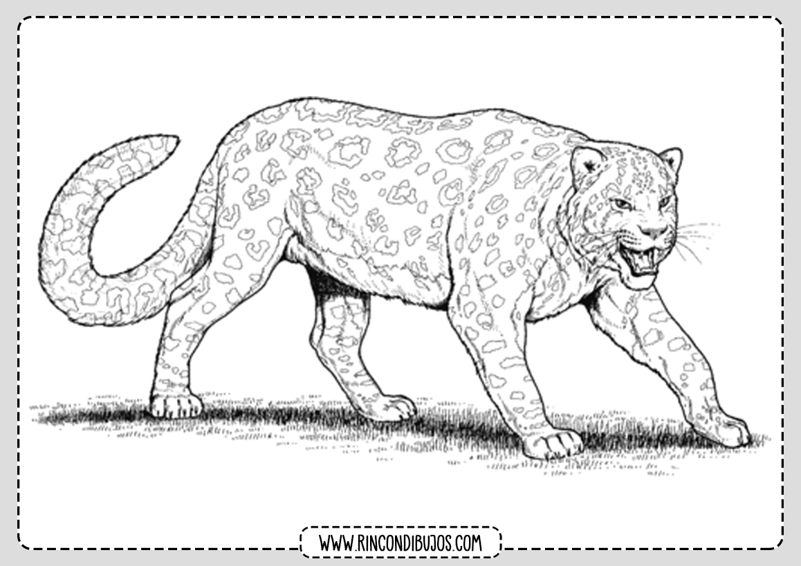 Dibujo de Leopardo para Colorear