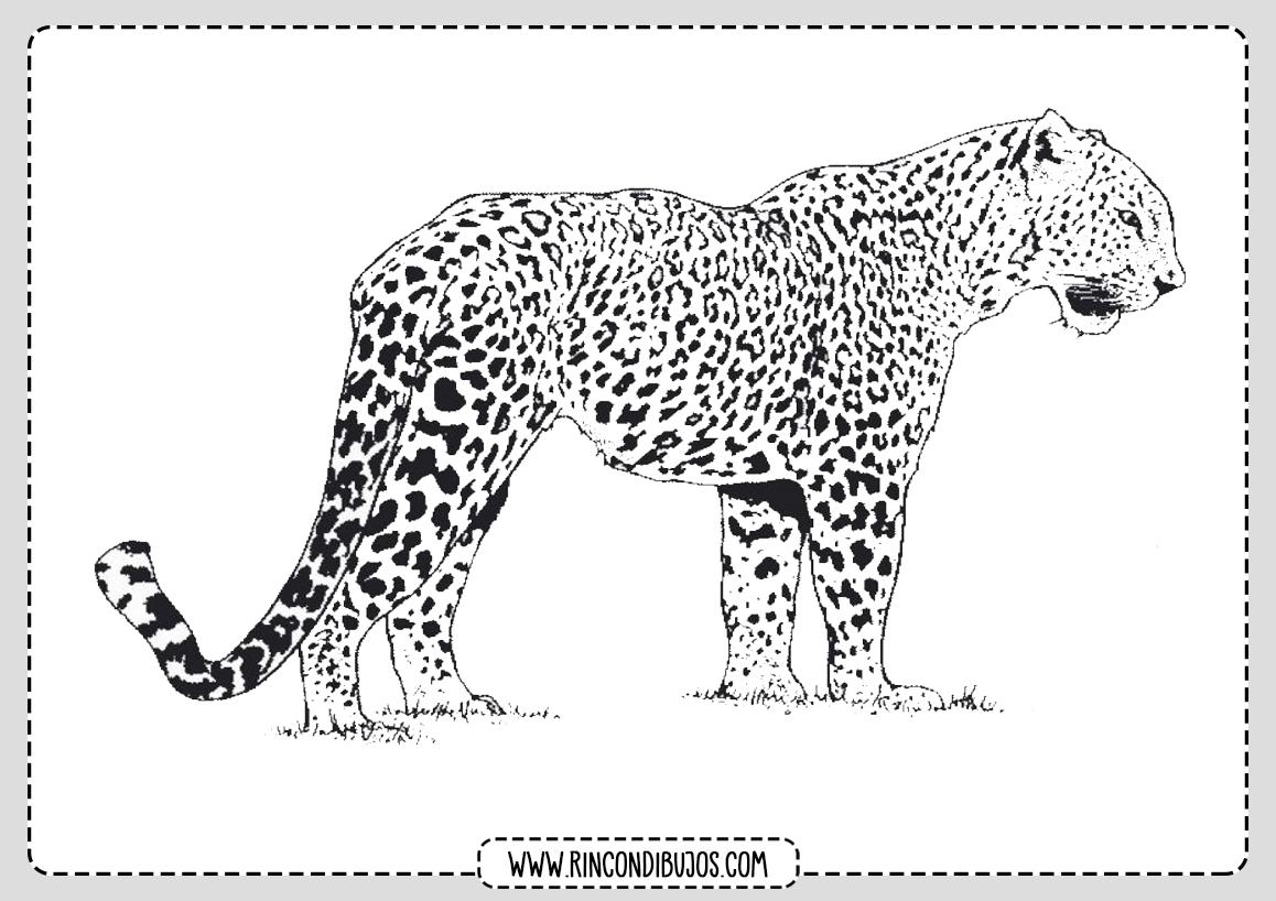 Dibujo de Leopardo para Pintar
