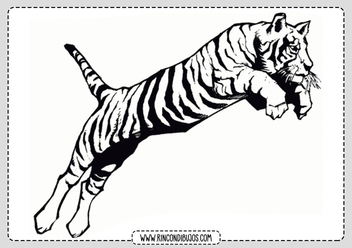 Dibujo de Tigre para pintar e imprimir