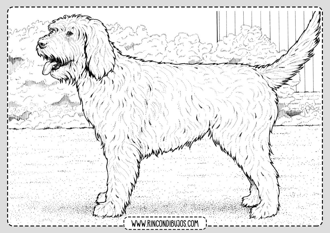 Dibujos Colorear y pintar de perros