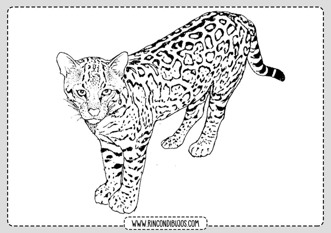 Dibujos de Leopardos Faciles para Colorear