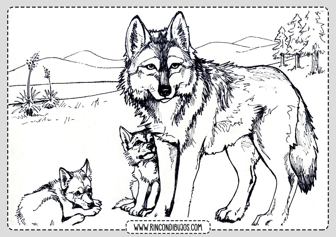 Dibujos de Lobos Manada Colorear