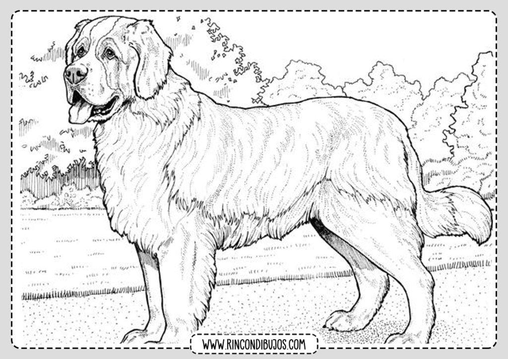 Dibujos de perros para pintar y colorear