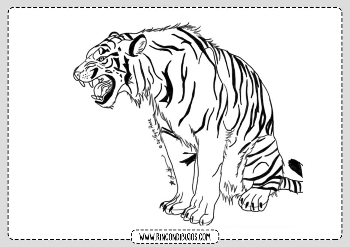 Imagenes Tigres para Colorear