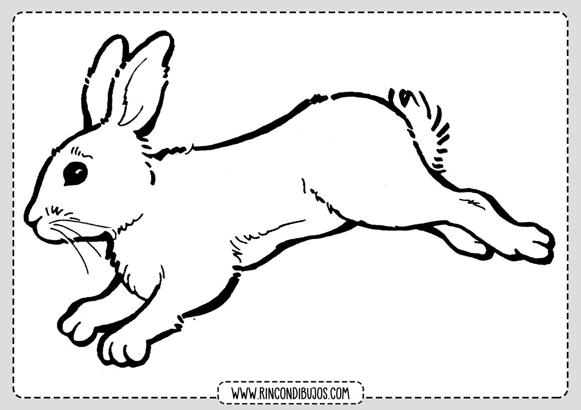 Imprimir y Colorear Dibujo de conejo