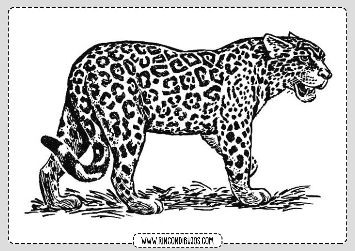 Leopardo Colorear Dibujos