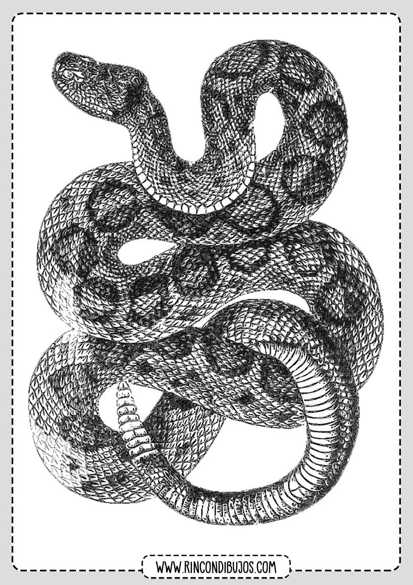 Dibujo Serpiente Cascabel
