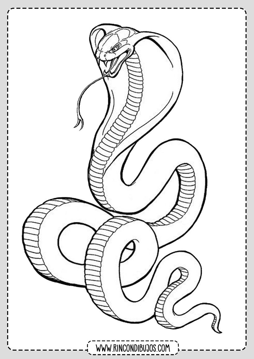Dibujo Serpiente Colorear