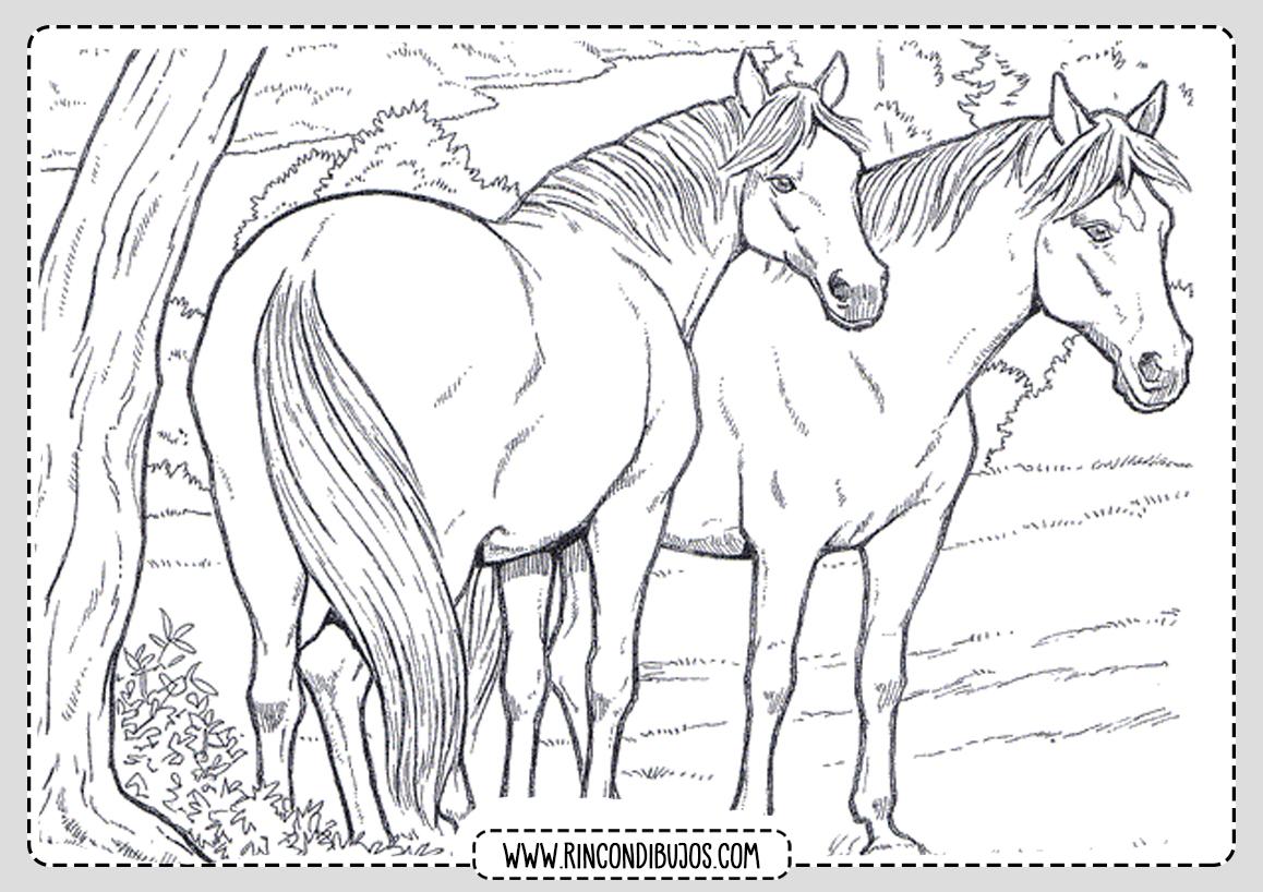 Dibujos de caballos Colorear pintar
