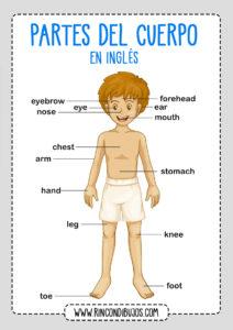 Las Partes del Cuerpo para aprender en Ingles