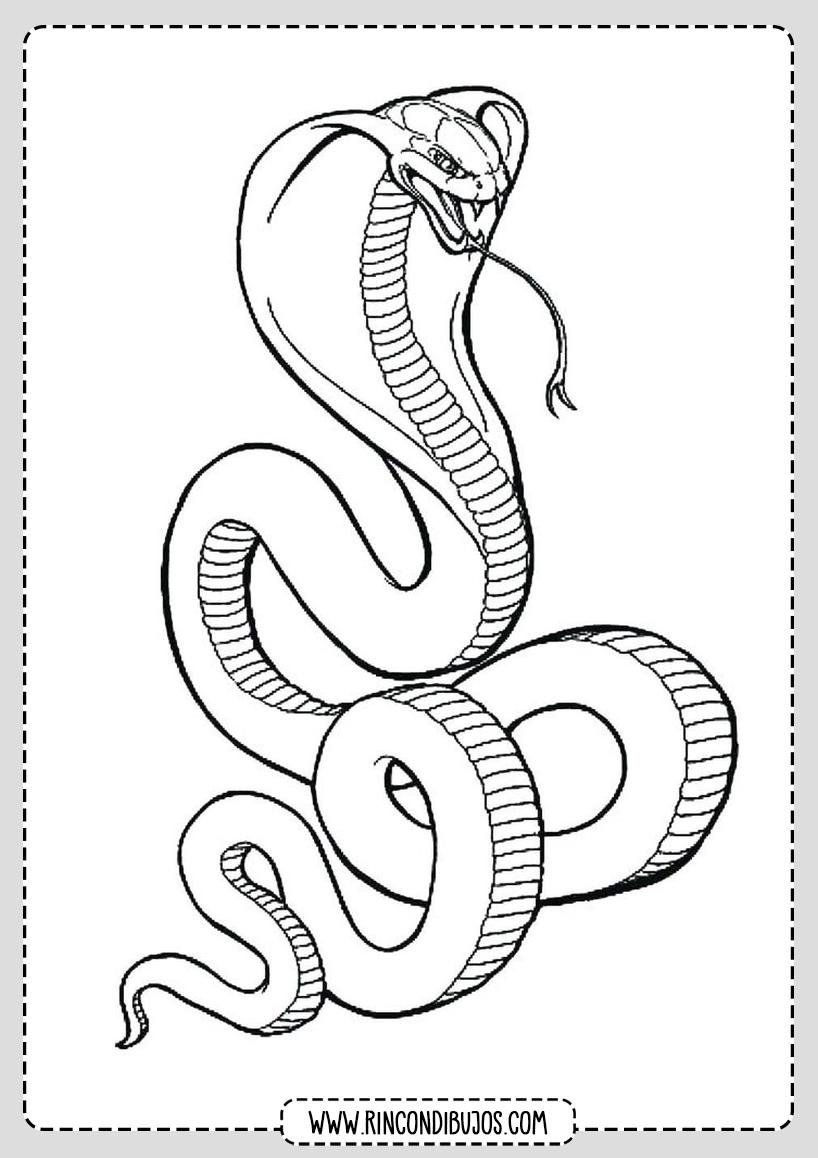 Serpiente Cobra Dibujo