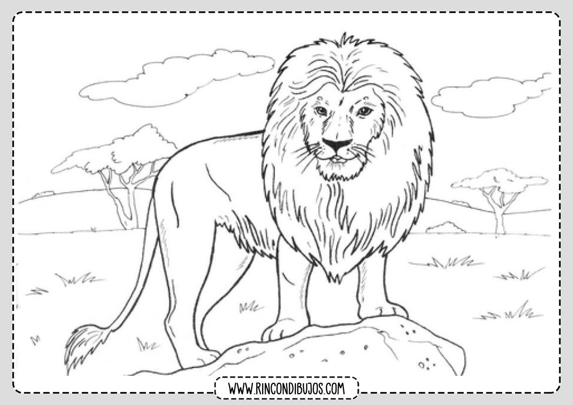 Colorear Dibujo de Leon