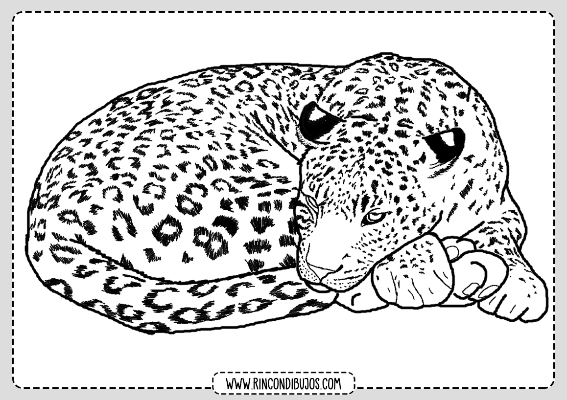 Colorear Dibujos de Leopardo