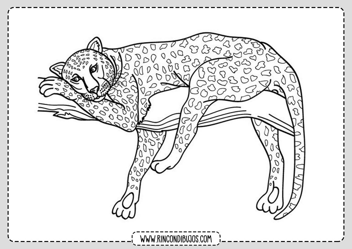 Colorear Leopardo Dibujo