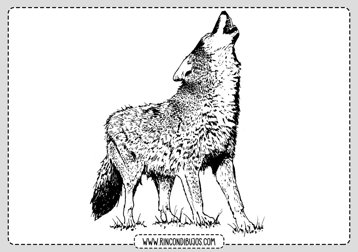 Colorear y Pintar Dibujo de Lobo