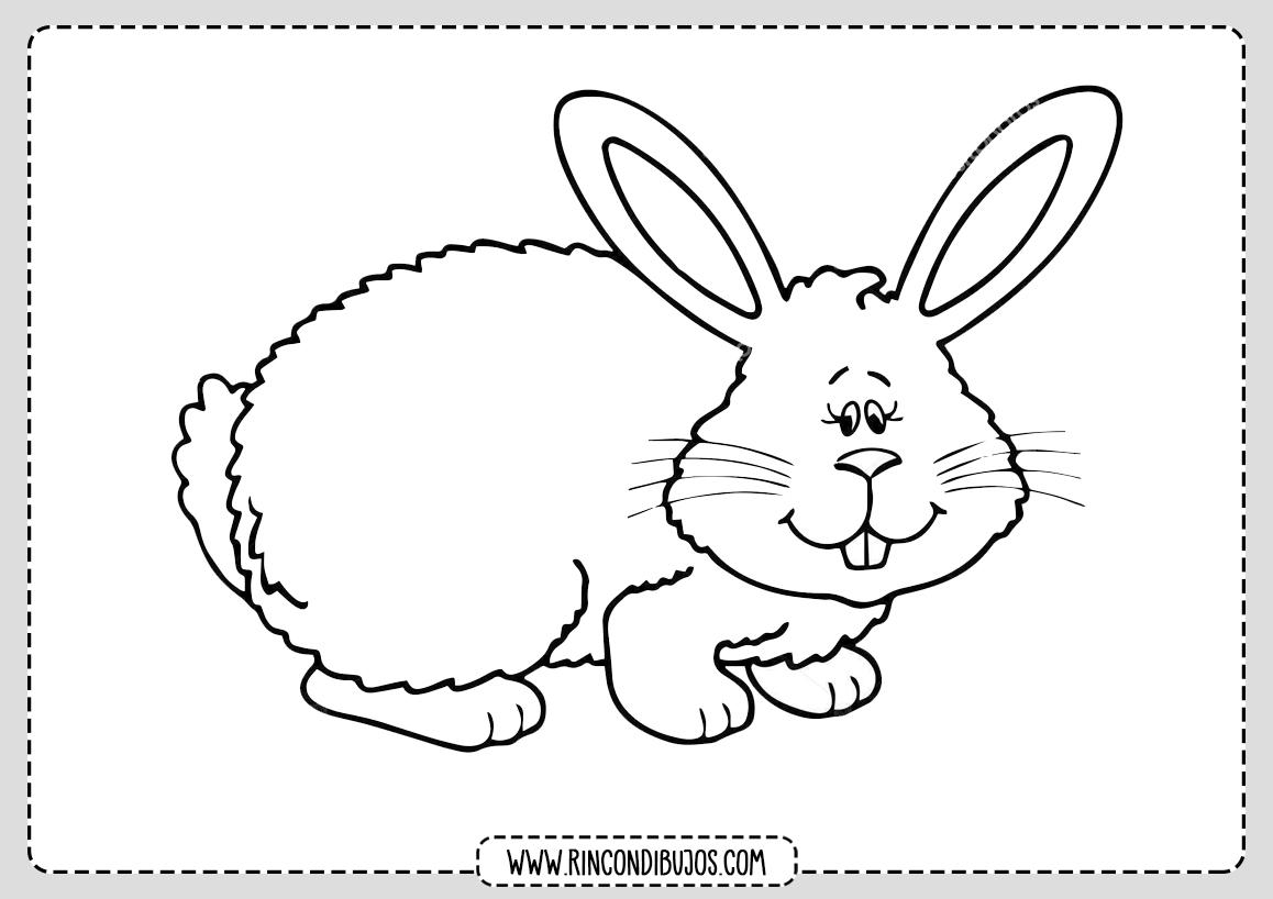 Como dibujar un Conejo