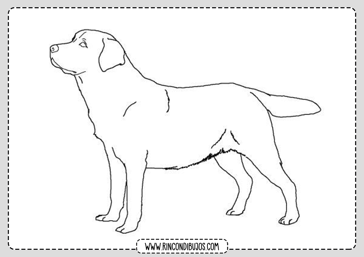 Dibujar un perro y colorear