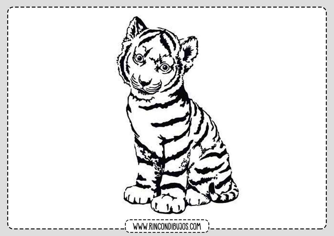 Dibujo Cachorro Tigre Colorear