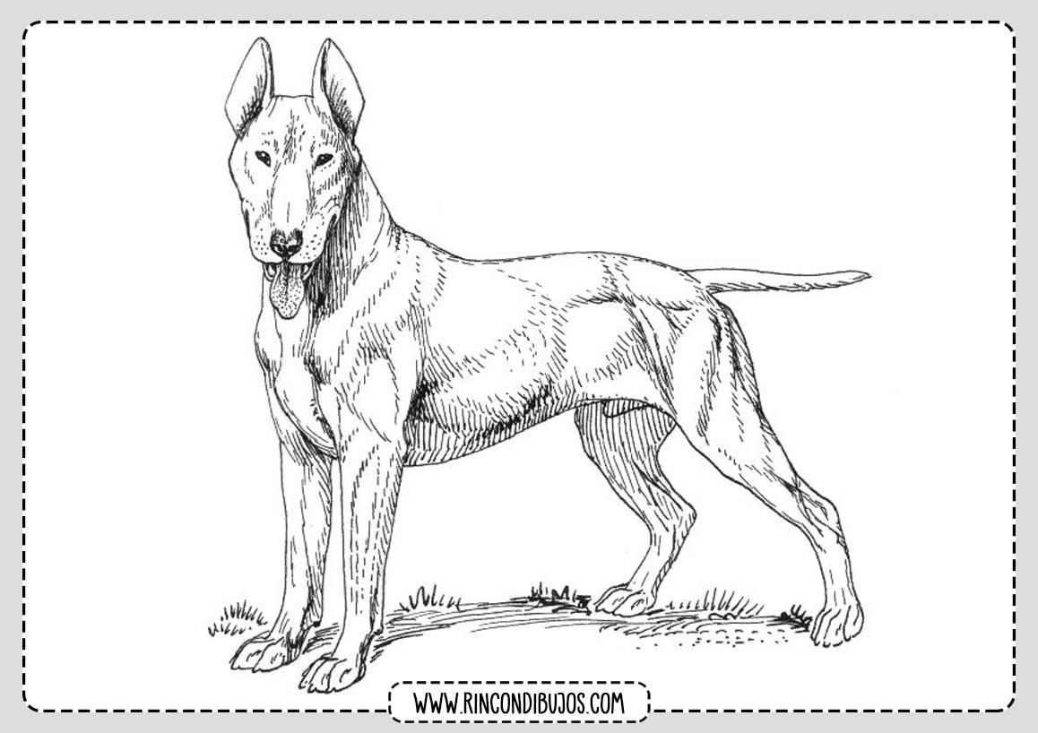 Dibujo Colorear Perro