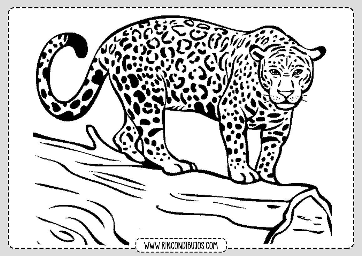 Dibujo Leopardo Pintar