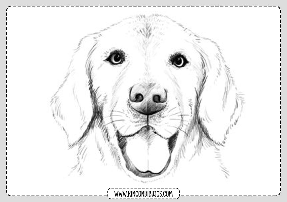 Dibujo Perro para Pintar y Colorear