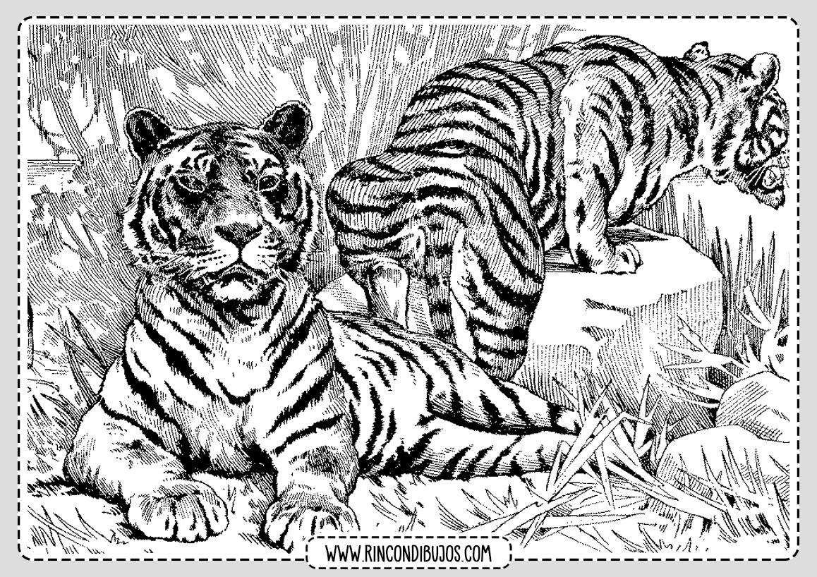 Dibujo Tigres para colorear