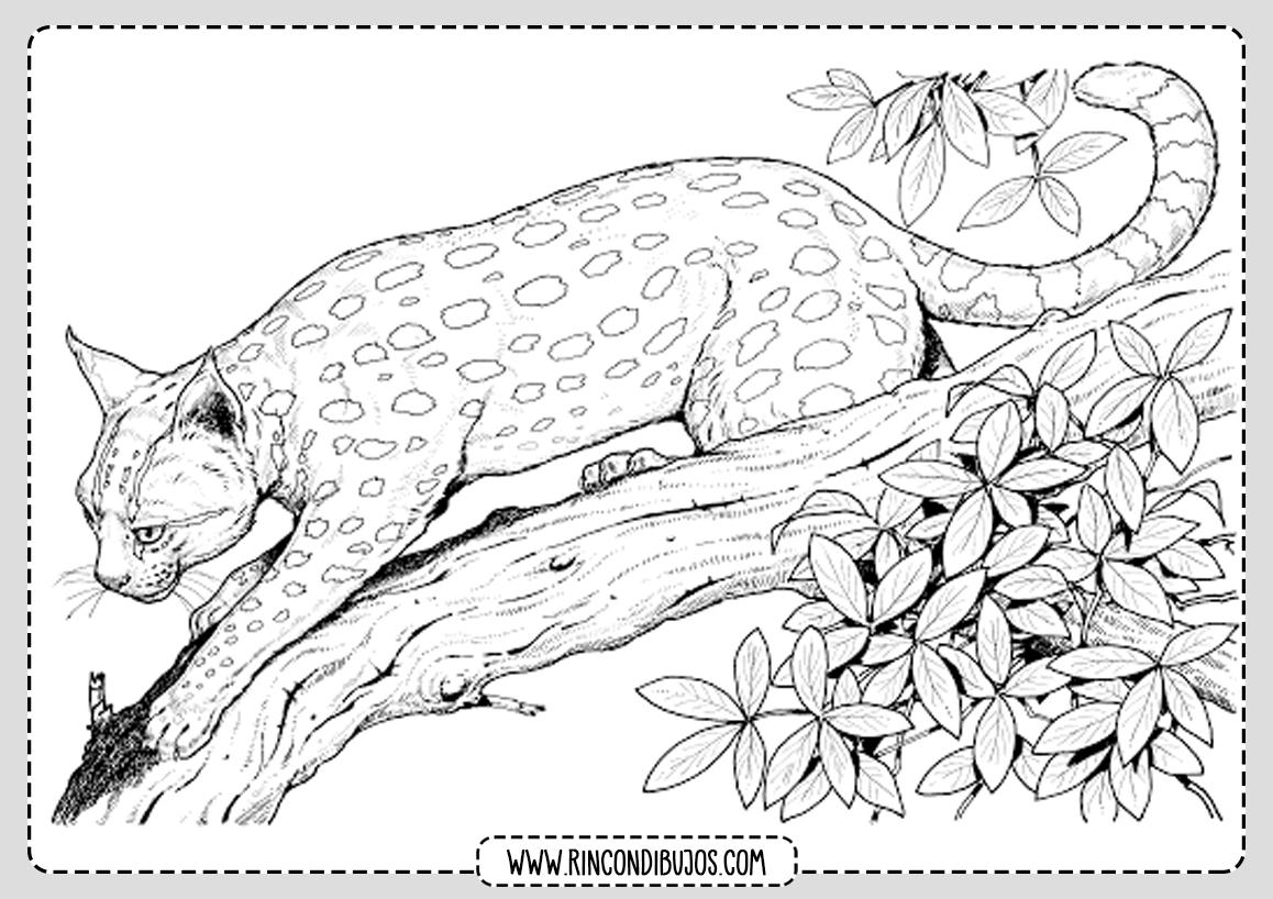 Dibujo de Leopardo Salvaje para colorear