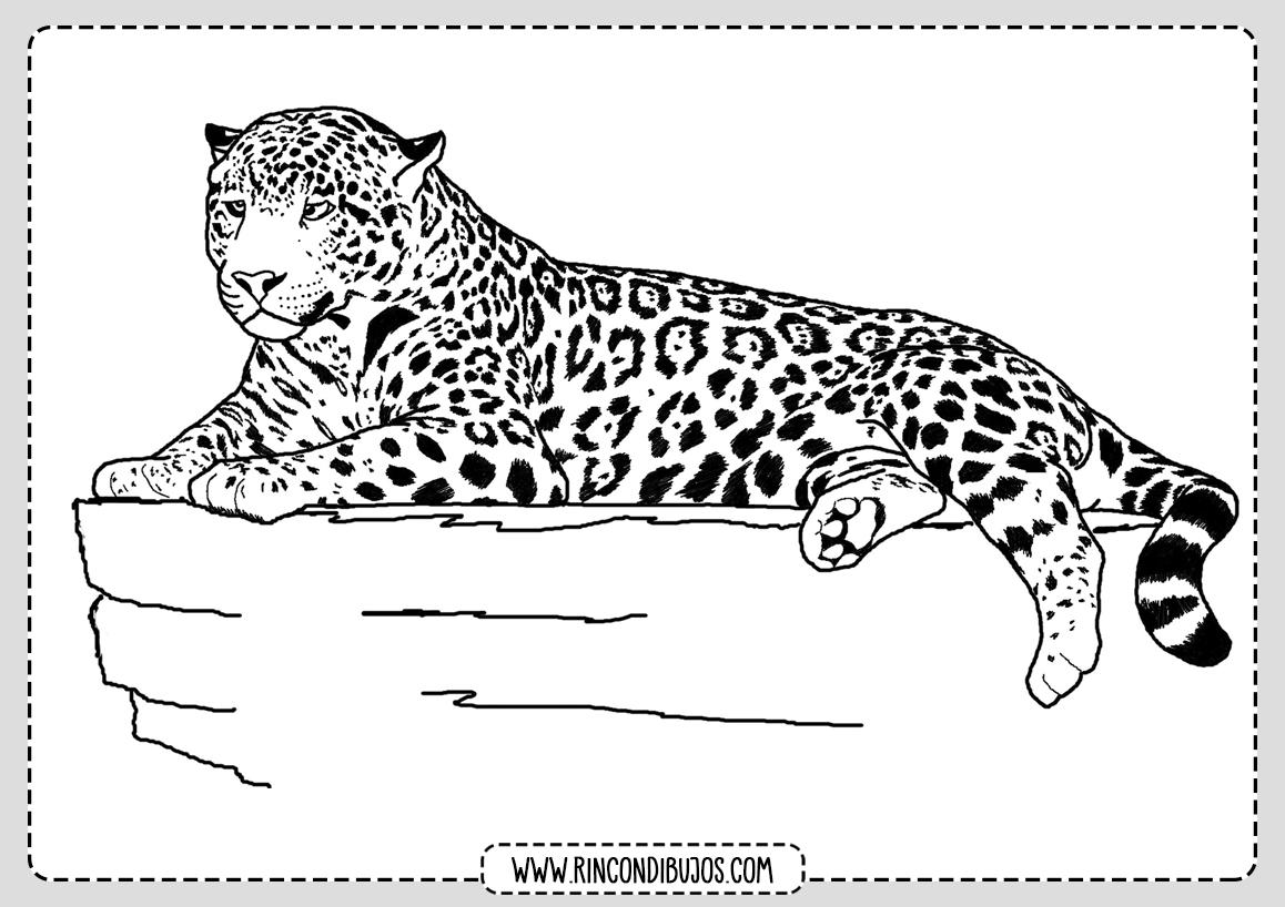 Dibujo de Leopardo facil para colorear