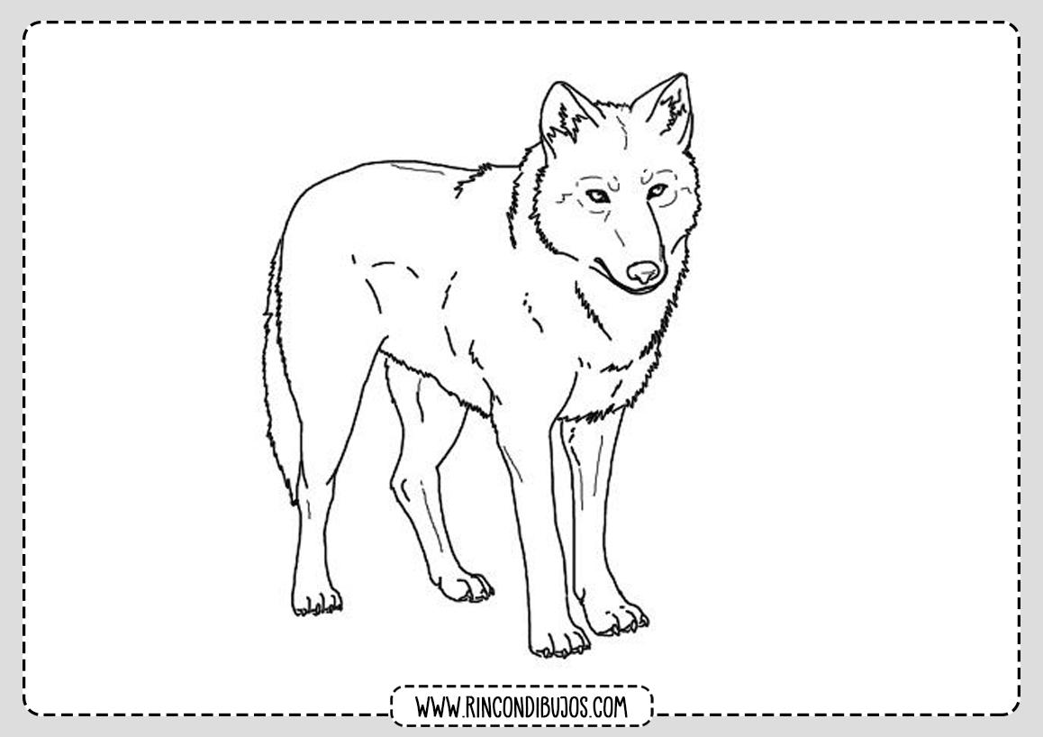 Dibujo de Lobo para Pintar