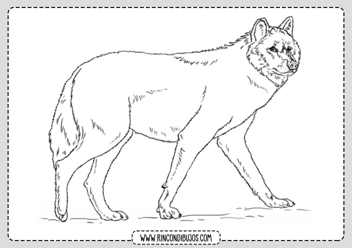 Dibujo de Lobo para imprimir y colorear