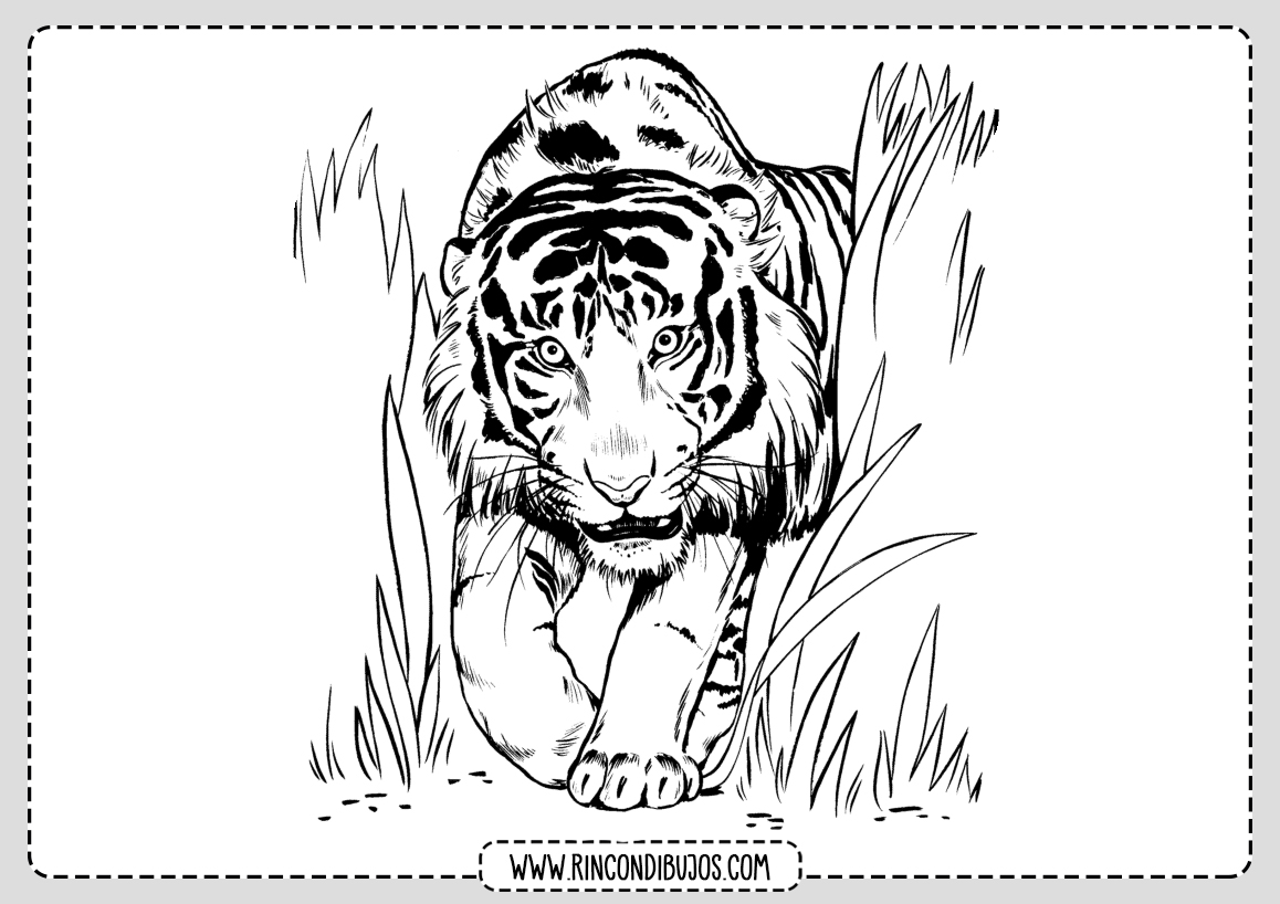 Dibujo de Tigre Salvaje para colorear
