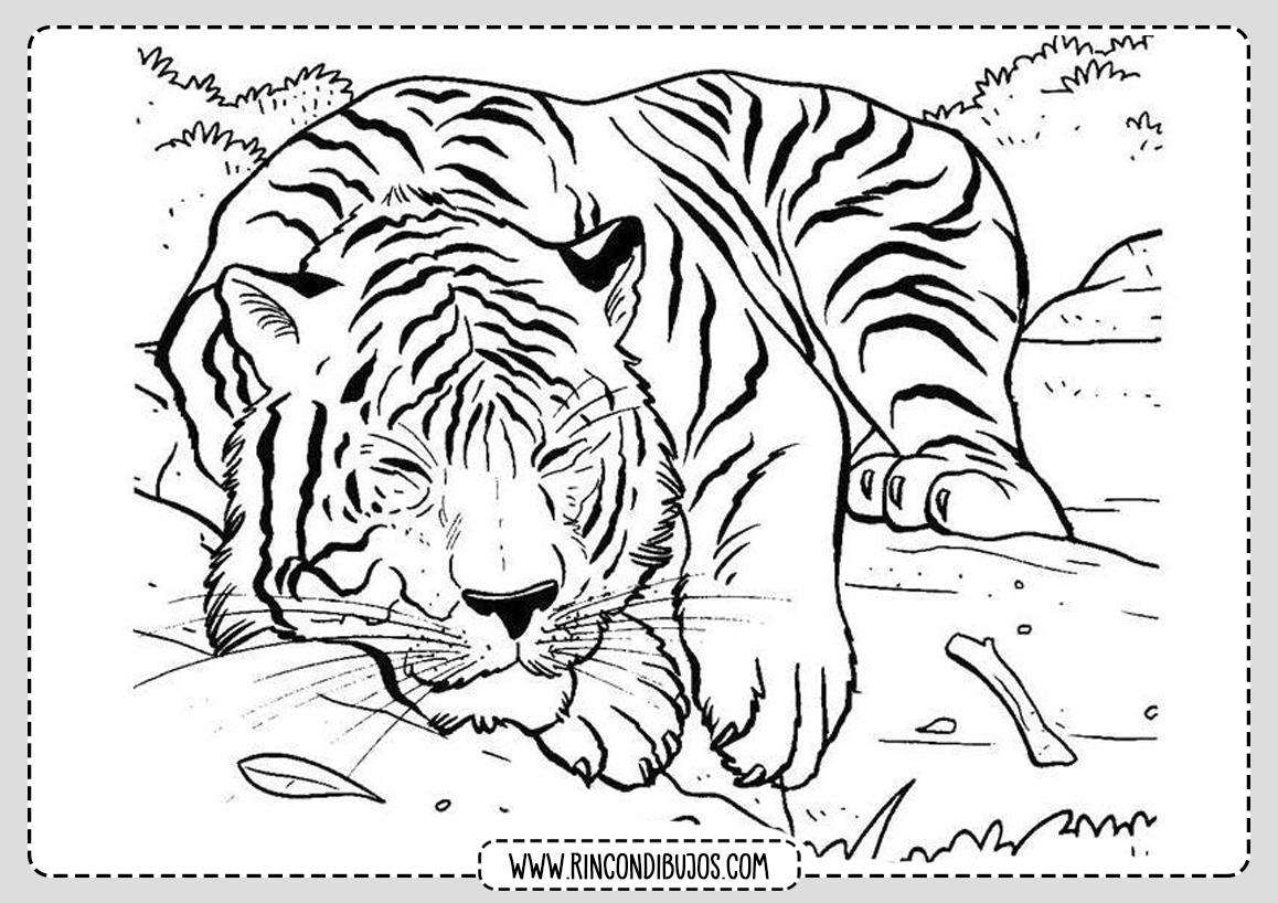Dibujo de Tigre para imprimir y colorear