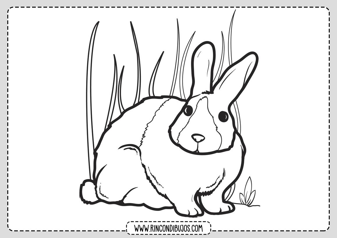 Dibujos de Conejos Colorear