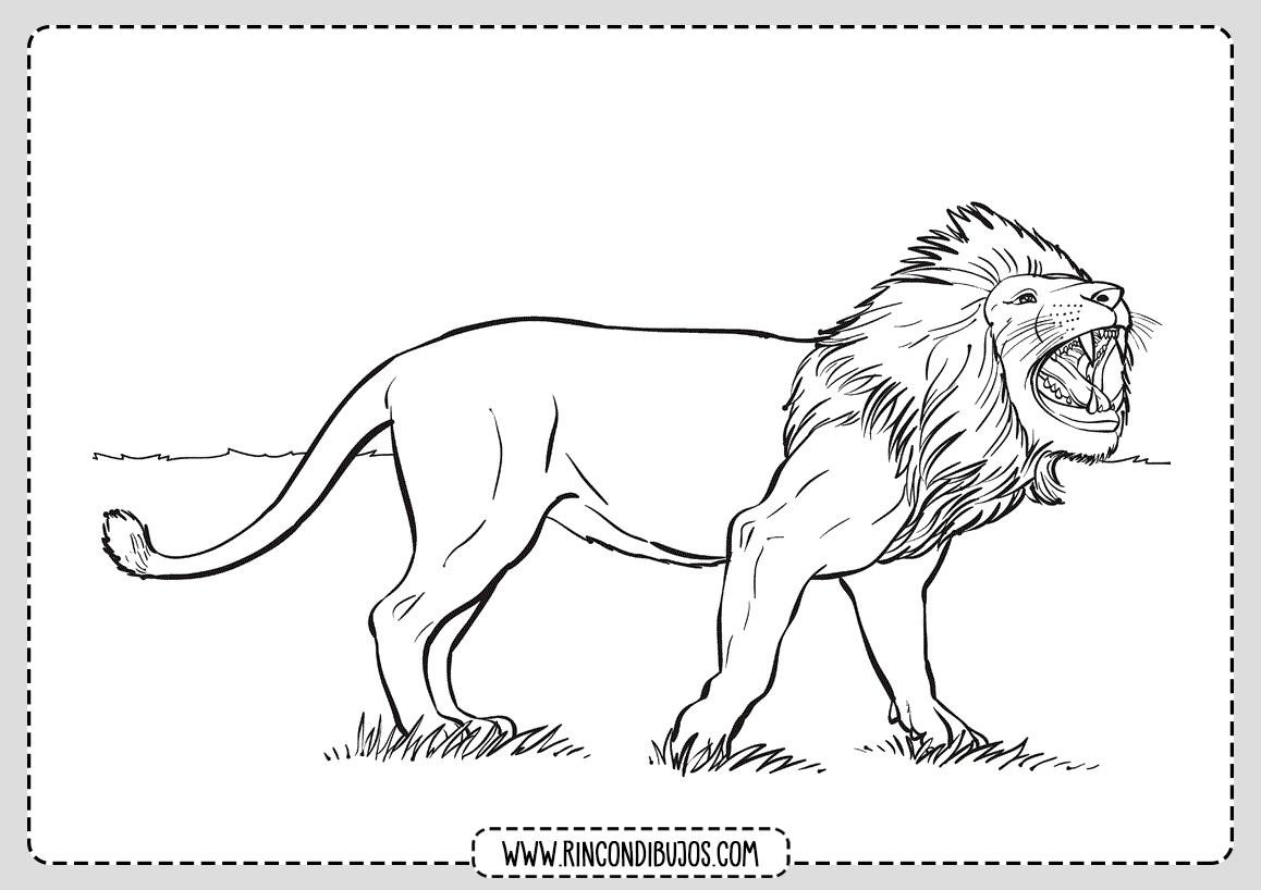 Dibujos de Leones para Colorear y Pintar